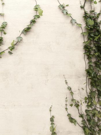 Choisissez une combinaison apaisante avec une couleur de peinture inspirée par la nature sur votre mur extérieur