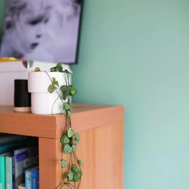 Peignez votre murs en vert
