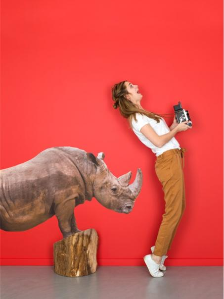 Autocollant rhinocéros