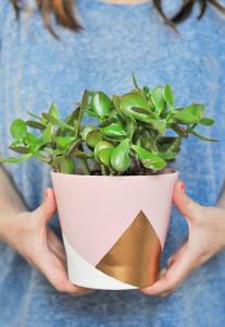 Donnez des couleurs à vos pots de fleurs et cache-pots!