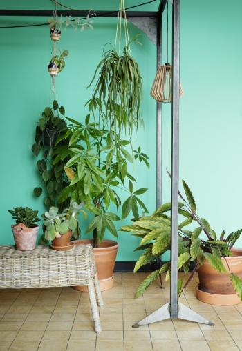 Inspiratie: groene muur