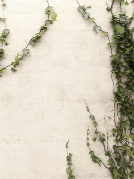 Kies een rustgevende combinatie met een natuur geïnspireerde verfkleur op je buitenmuur