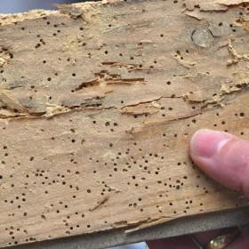 Houtworm bestrijden: hoe doe je dat?